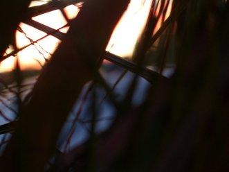 natural branching latticework. . .