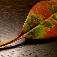 One leaf . . .